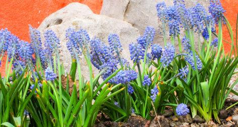 Wunderwelt Garten