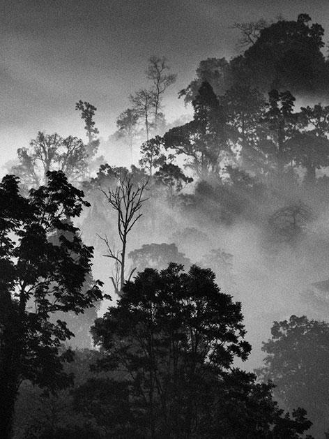 """Scharz/weiß-Fotografie """"Bäume"""" von Claudia Henzler"""
