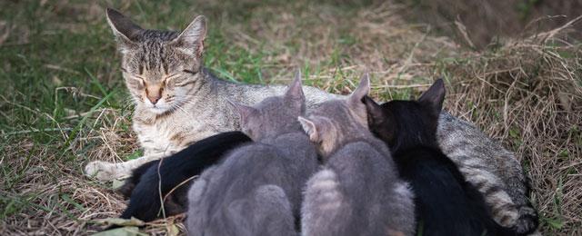 Umstritten Kastrationspflicht Für Katzen Guten Morgen