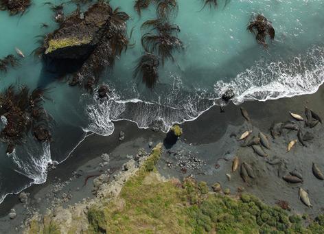 See-Elefanten aus der Luft