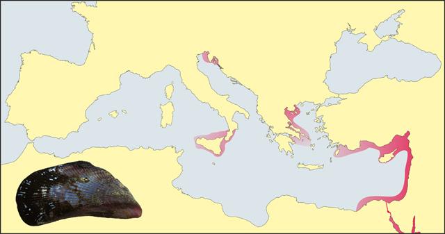 Eine Landkarte des Mittelmeeres mit Verbreitungsgebiet von Brachidontes pharaonis