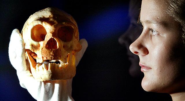 Frau hält das Schädelmodell des Homo floresiensis in Händen