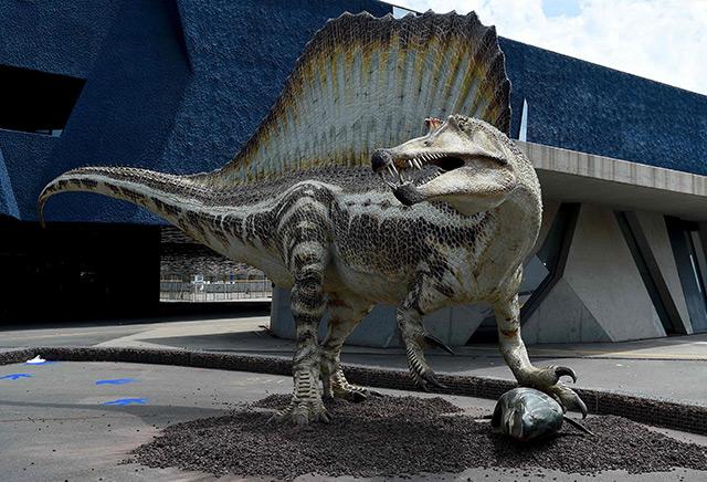 Modell eines Spinosaures, das bei einer Ausstellung im naturwissenschaftlichen Museum in Barcelona ab Juli 2016 gezeigt wird
