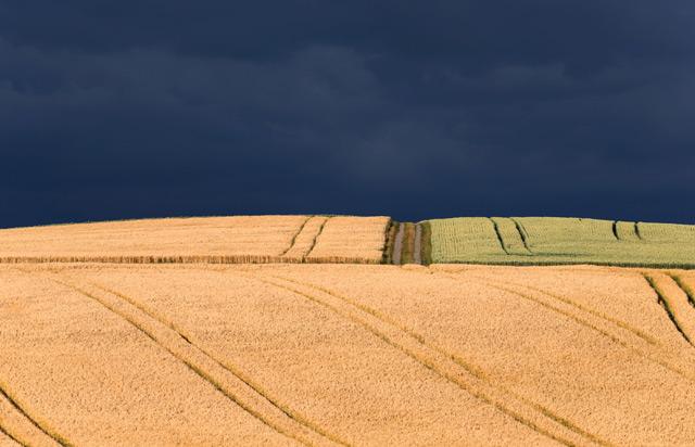 Getreidefelder unter Wolken