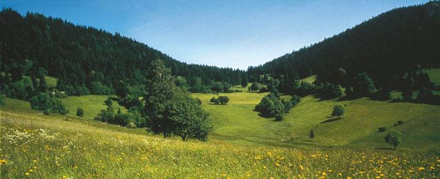 Guten Morgen österreich Ab 16 August In Niederösterreich