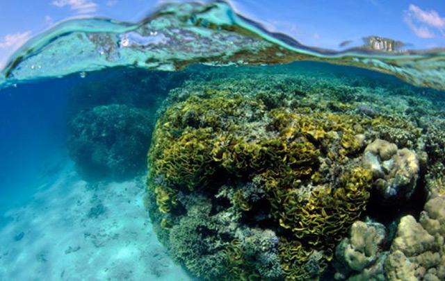 Korallenriffe auf den Malediven