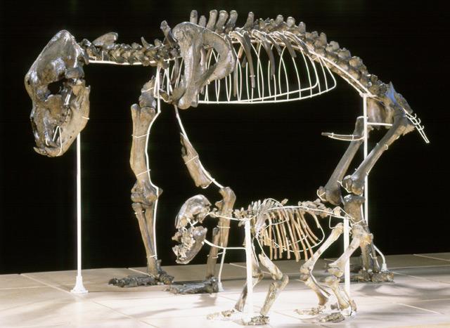 Skelett eines Höhlenbärs und Nachwuchs