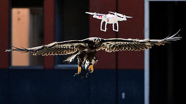 Adler auf Drohnenjagd