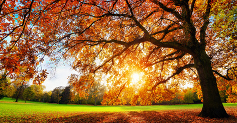 Farbtrends Für Den Herbst Guten Morgen österreich