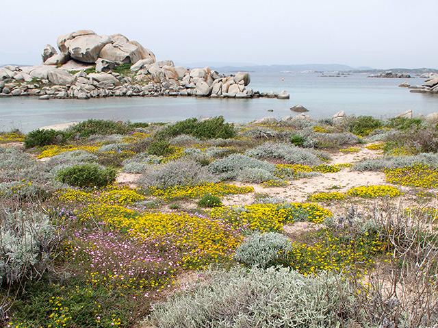 Inselgruppe Lavezzi zwischen Korsika und Sardinien