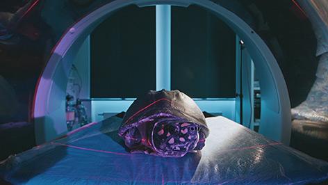 Strahlen-Dreikielschildkröte im Computer-Tomographen