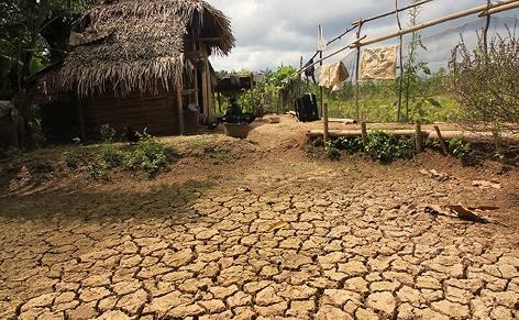Ausgetrocknete Reisfarm in Indonesien