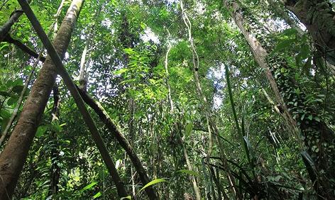 Indonesischer Regenwald