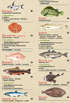 Fischratgeber von Greenpeace