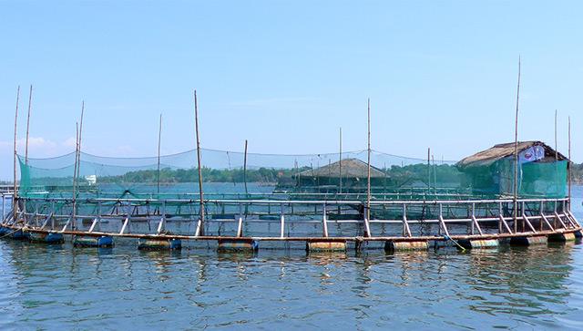 Offenes Netzgehege einer Aquakultur in den Philippinen