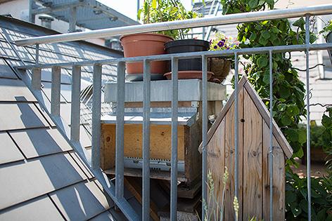 Bienenstock auf einer Dachterasse in Wien