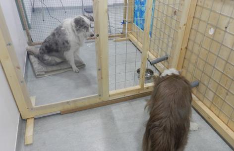 Hunde bei Versuchen zur Freigiebigkeit