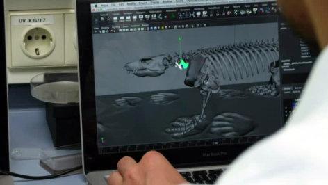 treffpunkt medizin  Das Geheimnis des Laufens - Evolution im Röntgenblick  Originaltitel: Das Geheimnis des Laufens - X-Ray Run