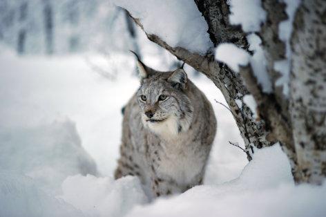 Skandinavien - Europas wilder Norden: Schweden und Norwegen