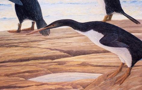 Künstlerische Illustration des Riesenpinguins