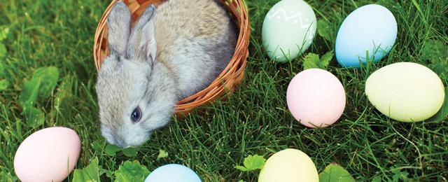 Bräuche Rund Ums Osterfest Guten Morgen österreich