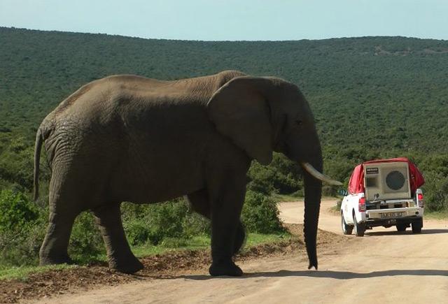 Elefant wird beschallt