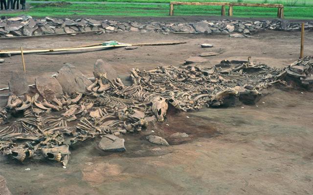 Skythische Begräbnisstätte im heutigen Sibirien mit Pferdeskeletten
