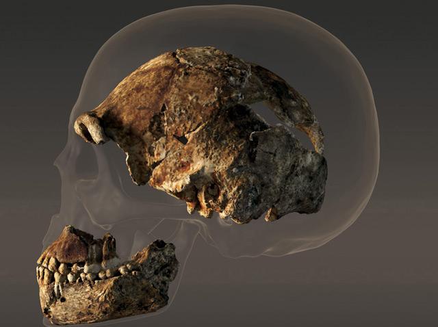 Homo naledi Schädel