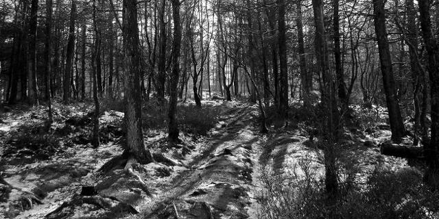 Wald in schwarz-weiß