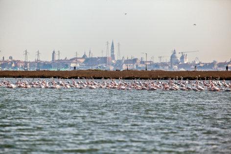 Wildes Venedig