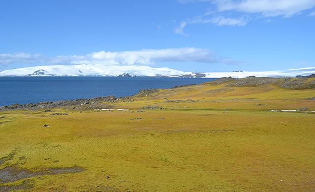 Braungrüne Moosfläche auf Green Island. Im Hintergrund mächtige Eisberge.