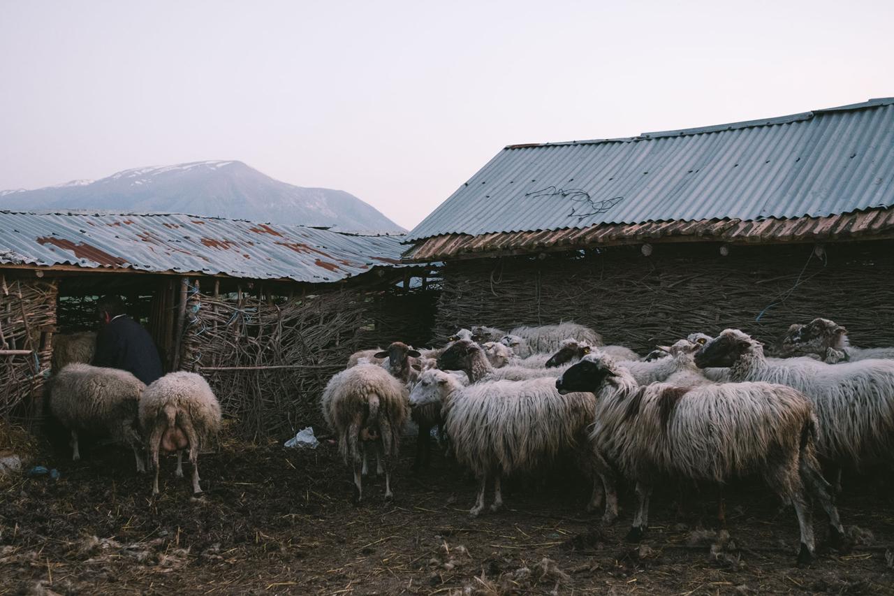 Hütten und Schafe