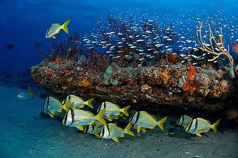 Gesund Korallen