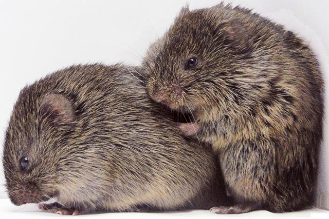 Männchen und Weibchen beim Kuscheln