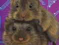 Männliche und weibliche Präriewühlmaus vor einem elektronischen Schaltkreis