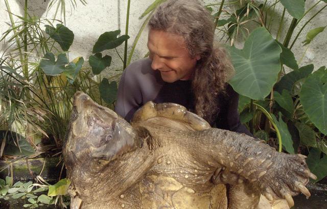 Peter Praschag mit seiner Alligatorgeier-Schildkröte