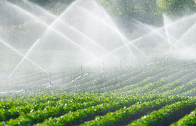 Gemüsefeld wird bewässert