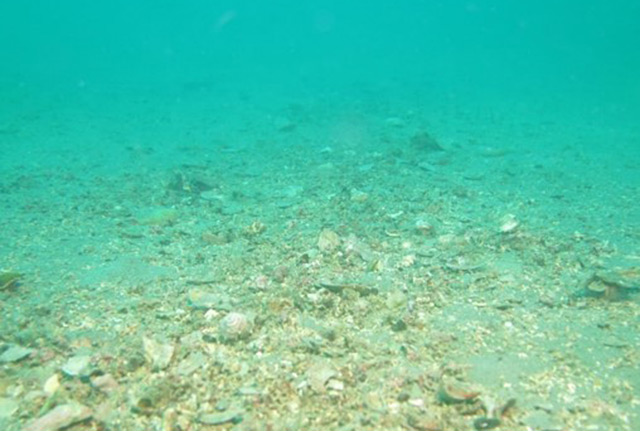 Keine Lebewesen: verwüsteter Meeresboden