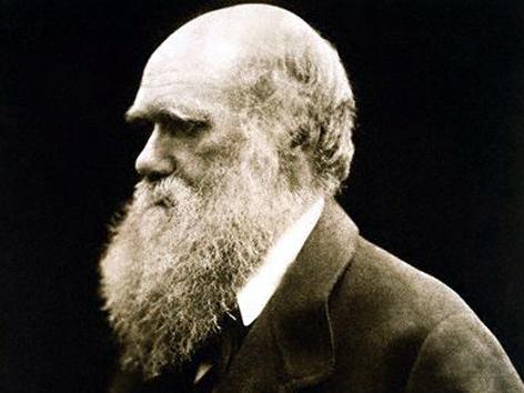 Fotografie von Charles Darwin, 1868, aufgenommen von Julia Margaret Cameron