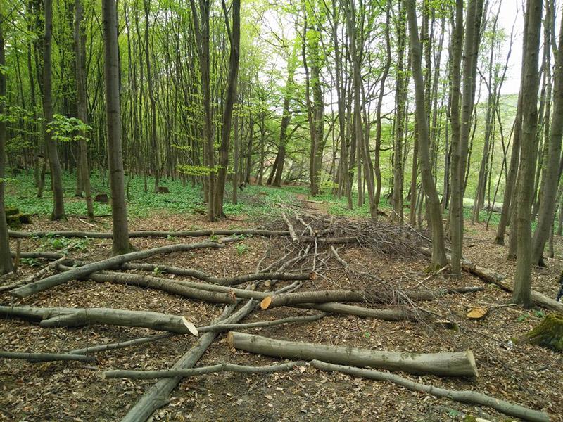 Wiener Wald: Baumstämme liegen quer über einem Weg