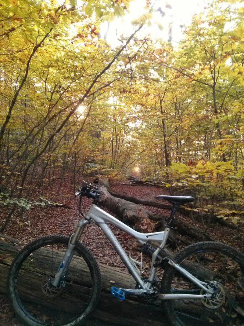 Wiener Wald und Mountain Bike