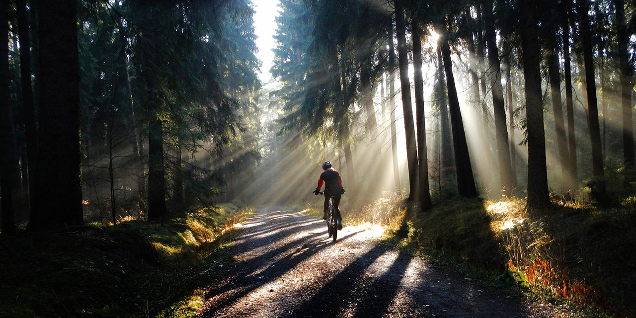Mountainbike im Wald