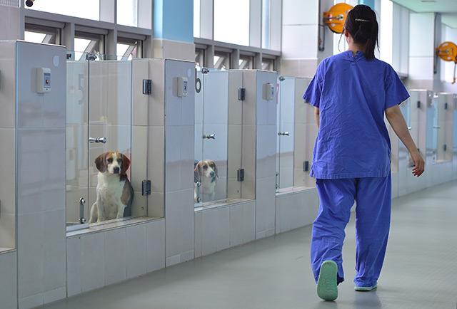 Die Laborhallen von Sooam Biotech