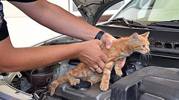 Baby Katze in Motorraum