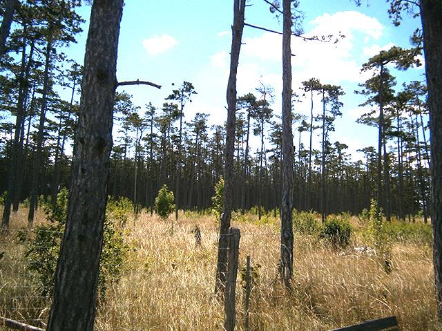 Ein ehemaliger Wald wurde zu einer grasbewachsenen Lichtung.