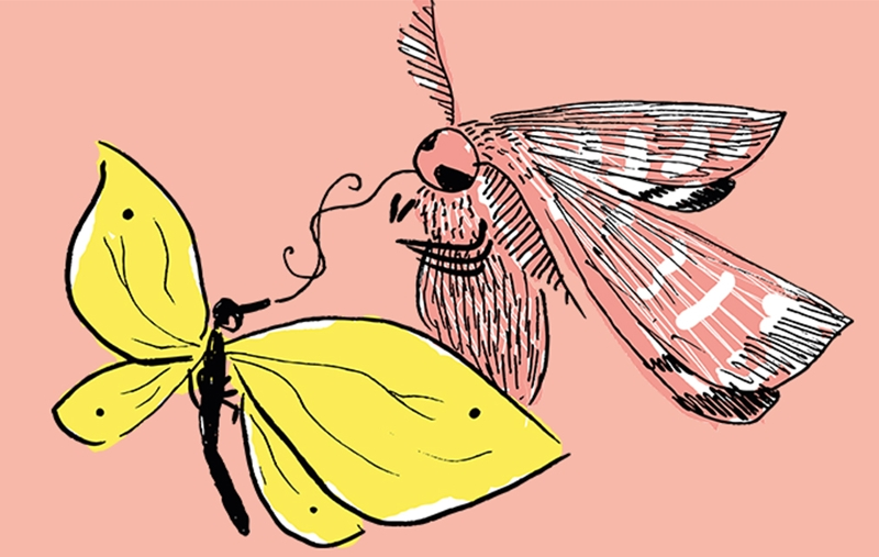 Illustration zweier Insekten