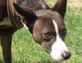Der Hund Viggo schaut unterwürfig