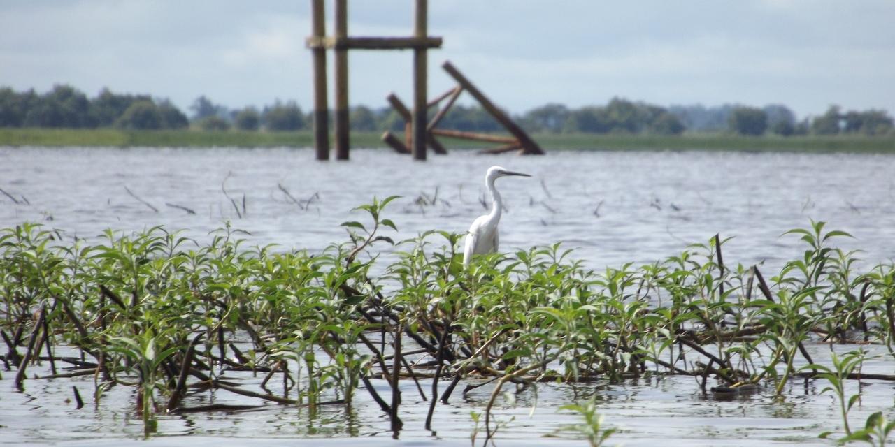 Bird Borneo Mahakam