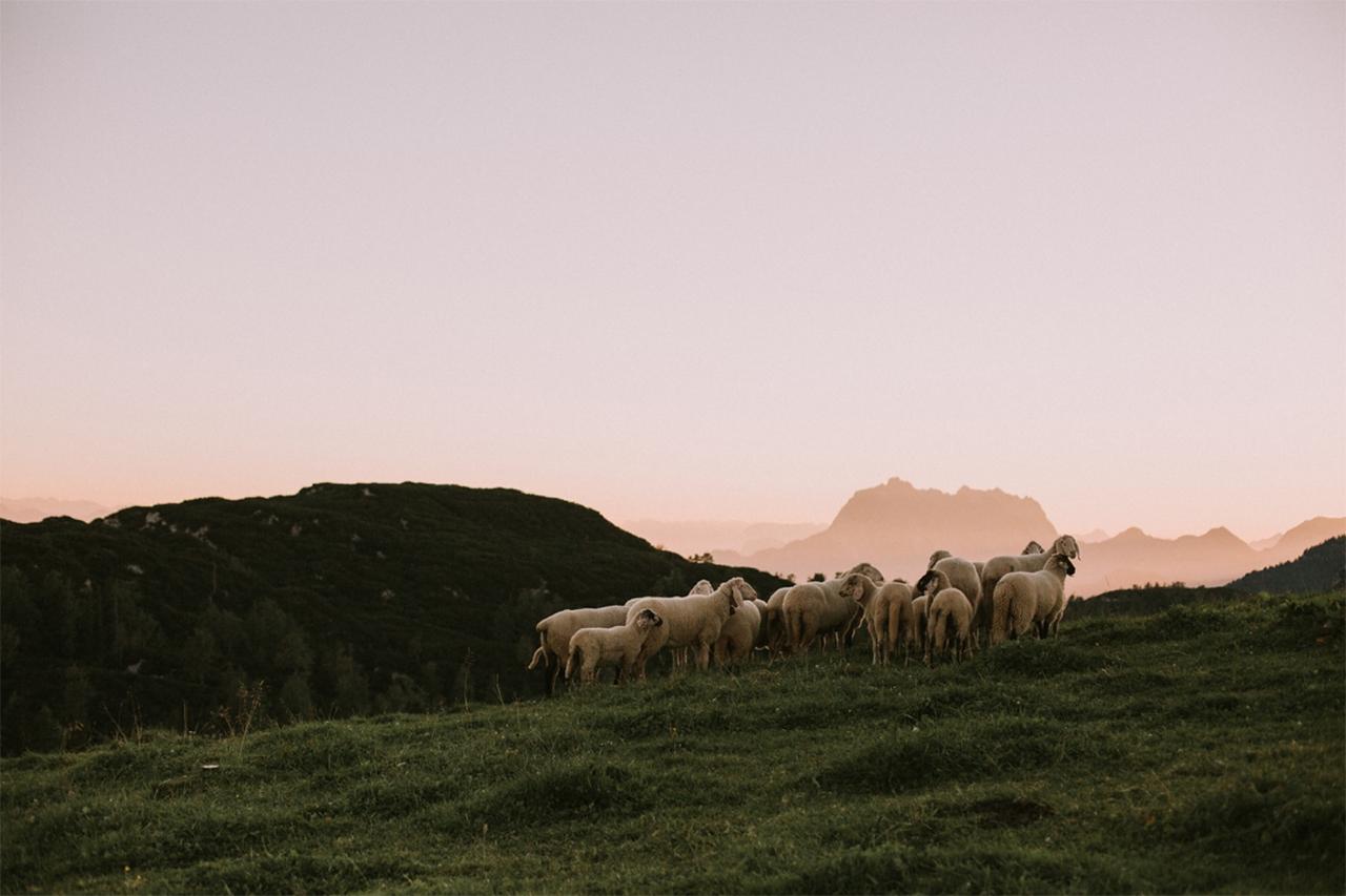 Schafe auf einer bergigen Wiese