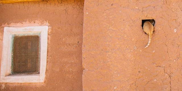 Katze von hinten fsitzt in einem Fenster in Marocco